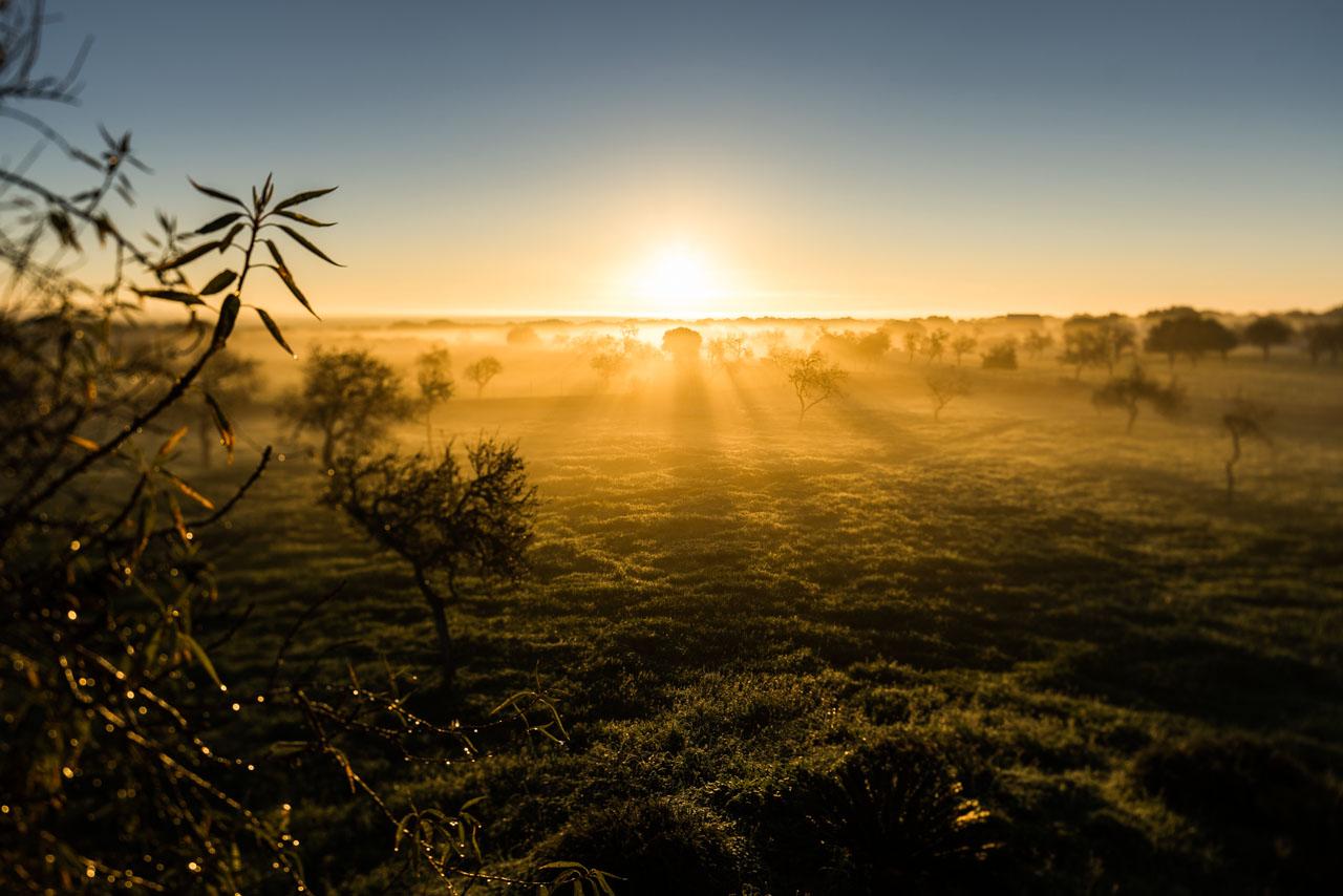 bo_photo-mallorca-es_llombards-sunrise-borris_burba-fotograf_duesseldorf