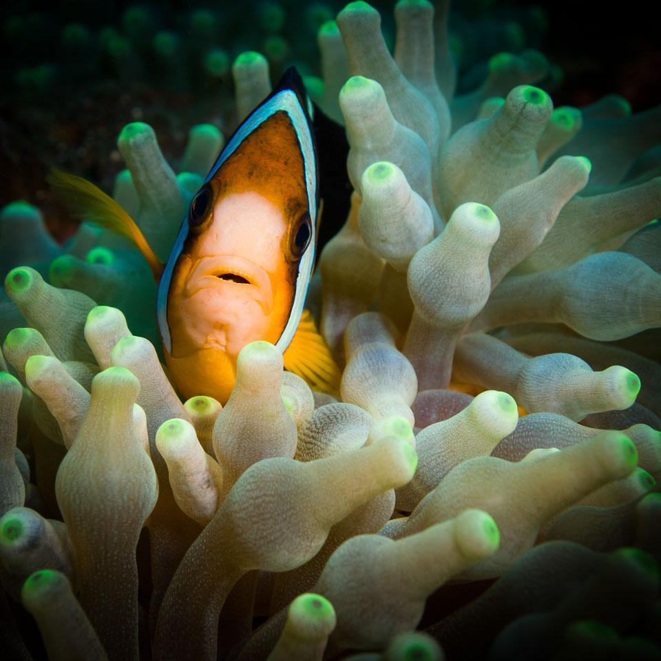 Geheimtipp Nr. 2: Exotische Fische und Farben - Mallorca Momente