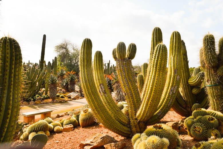 mallorca-momente-blog-botanicactus-0302