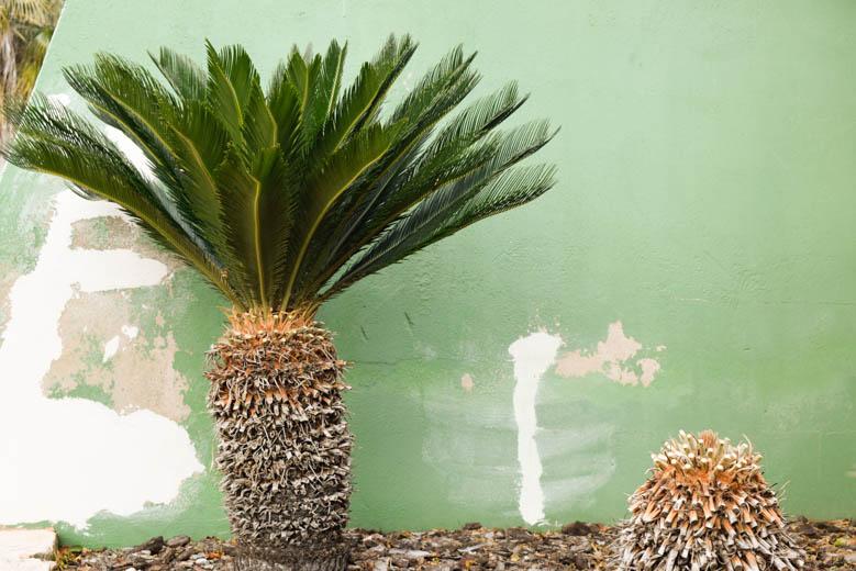 mallorca-momente-blog-botanicactus-0313