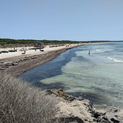 Seegras Mallorca Strand